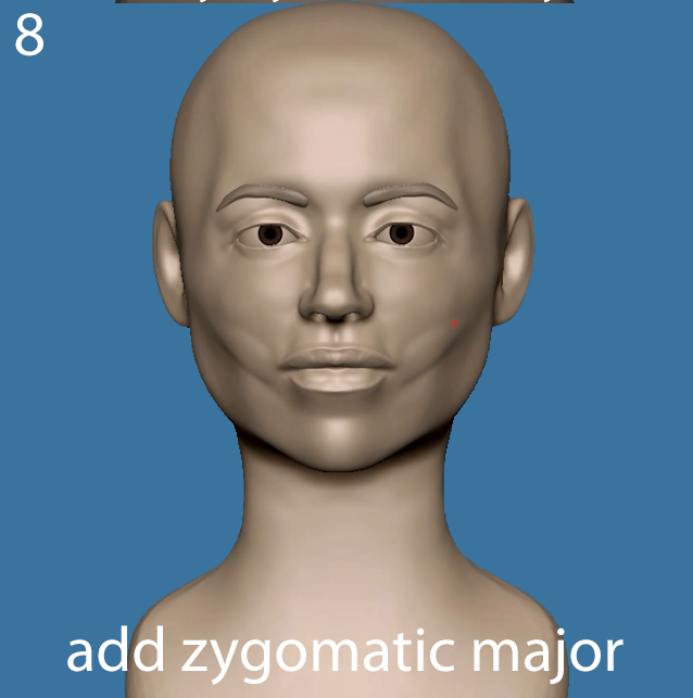 Add zygmoatic major
